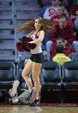2015 basket-ball de NCAA - temple - UCF Image stock