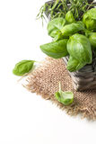 Basket of basil Royalty Free Stock Images