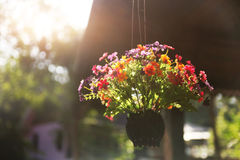 Basket with beautiful flowers Royalty Free Stock Images