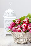 Basket of beautiful pink tulips Royalty Free Stock Images