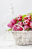 Basket of beautiful pink tulips Royalty Free Stock Photo