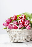 Basket of beautiful pink tulips Stock Image