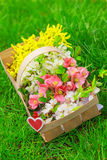 Basket with beautiful spring flowers Royalty Free Stock Photography
