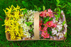 Basket with beautiful spring flowers Stock Image