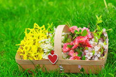 Basket with beautiful spring flowers Stock Photography
