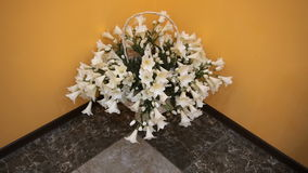 A basket of beautiful white flowers standing in the corner stock footage