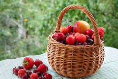 Basket with berries and fruits. Wicker basket with berries and fruits on a background of foliage Royalty Free Stock Photography
