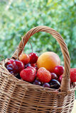 Basket with berries and fruits. Wicker basket with berries and fruits on a background of foliage Royalty Free Stock Images