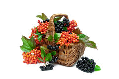 Basket with berries of a guelder-rose and chokeberry on a white Royalty Free Stock Photography