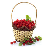 Basket with berries Stock Photography
