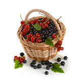Basket of berries Stock Photo