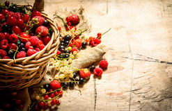Basket with berries. On wooden table. Stock Images