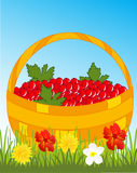 Basket with berry. Full basket of the red berry on glade with flower Royalty Free Stock Photography