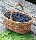 Basket with a bilberry. Royalty Free Stock Images