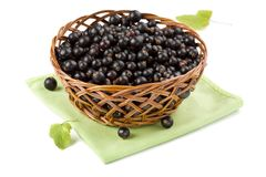 Basket of black currant Royalty Free Stock Image