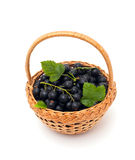 Basket with black currant berries over white Royalty Free Stock Photo