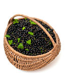 Basket with black currant Royalty Free Stock Image