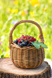 Basket of black currant and red currant Stock Images
