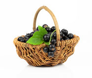 Basket with black currant Stock Image