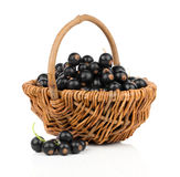 Basket with black currant Royalty Free Stock Photography