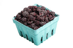 Basket of Black Raspberries isolated on white. A Basket of freshly picked Black Raspberries isolated on white Royalty Free Stock Images