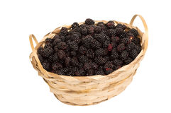 Basket Of Blackberries Isolated On White. Beautiful horizontal shot of a basket of fresh picked blackberries isolated on a white background with lots of copy Stock Photography