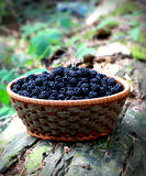 Basket of blackberries on old wood Stock Photo