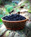Basket of blackberries on old wood Stock Photo