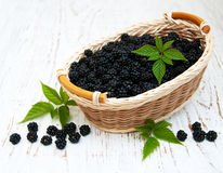 Basket with Blackberries Stock Photography