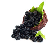 Basket  of Blackberries Stock Image