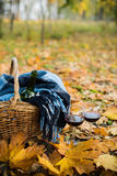 Basket with a blanket, wine and glasses. On yellow autumn leaves. A cozy autumn picnic in the park, a warm autumn day Royalty Free Stock Image