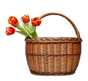 Basket with blooming tulips Stock Photo