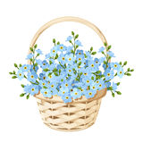 Basket with blue forget-me-not flowers. Vector illustration. Royalty Free Stock Image
