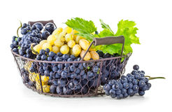 Basket blue and white grapes with green leaf Royalty Free Stock Photos
