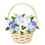 Basket with blue and white pansy flowers. Vector illustration. Stock Images