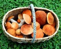 Basket boletus mushrooms Royalty Free Stock Photography