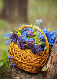 Basket bouquet Royalty Free Stock Photos