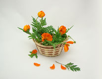 Basket with a bouquet in flowers. Wattled basket with a bouquet in the orange flowers Stock Photos