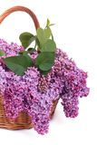 Basket with a bouquet of purple lilacs Royalty Free Stock Photos