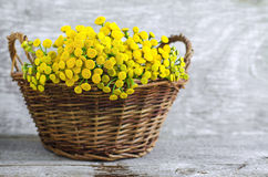 Basket with a bouquet of tansy flowers Royalty Free Stock Photos