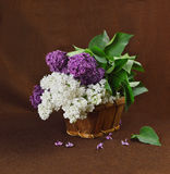 Basket with a branch of lilac flower royalty free stock photos
