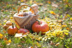 Basket of bread. Basket of  baguette on grass in autumn garden and Royalty Free Stock Image