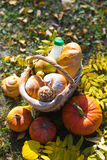 Basket of bread. Basket of  baguette on grass in autumn garden and Royalty Free Stock Images