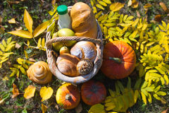 Basket of bread. Basket of  baguette on grass in autumn garden and Royalty Free Stock Photography