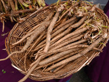 Basket of Burdock Root. On purple tablecloth at farmers market Royalty Free Stock Image