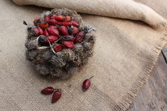 Basket of burdock seeds and rose hips Royalty Free Stock Images
