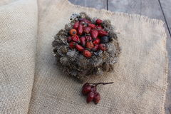 Basket of burdock seeds and rose hips Stock Photos
