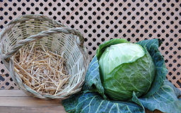Basket and cabbage Stock Images