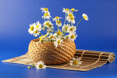 Basket with camomiles Stock Images