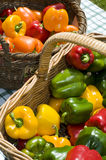 Basket of capsicums Royalty Free Stock Image